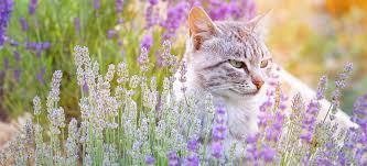 Image result for pet in garden