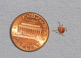 Tick bite can cause a red meat allergy   Mississippi State ...