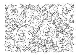 薔薇バラ03 A4無料印刷の大人のぬりえ 薔薇 塗り絵ぬり絵ぬりえ