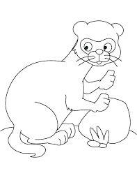 Black Footed Ferret Coloring Page At Getdrawingscom Free For