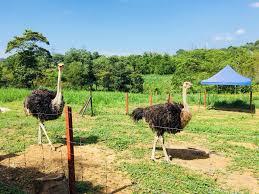 animal garden. Image May Contain: Sky, Mountain, Outdoor And Nature Animal Garden A
