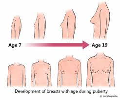 Physical Changes That Occur During Puberty In Girls