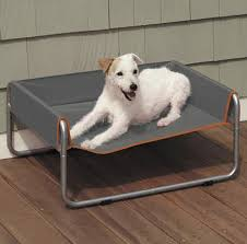 wayfair cot style outdoor dog beds with sides