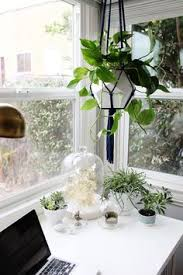 home office plants design idea for breakfast bar and stool seating arrangement we want to implement under kitchen windows amazing office plants