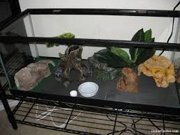 now use your imagination to fit hides and terrarium decorations here s an example of what we came up with
