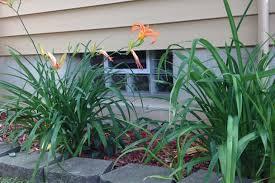 glass block basement window behind a lily