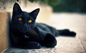 street black cat eyes wallpaper
