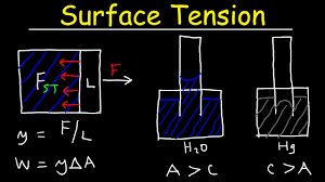 Surface Tension Of Water Capillary Action Cohesive And Adhesive Forces Work Potential Energy