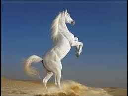 Image result for galloping horse