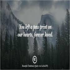 Quotes About Death Of A Loved One Classy Quotes About Losing A Loved One With Inspirational Quotes After