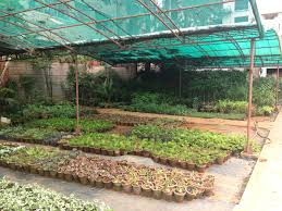 Ornamental Kitchen Garden Kitchen Gardens Organicadventuresinbangalore