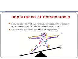 homeostasis essay write an essay on homeostasis how is homeostasis the maintenance of a dynamic range of environmental qualities rather than holding the environment at a set