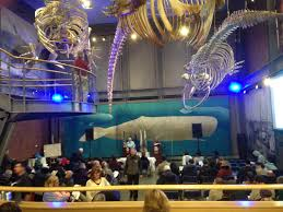 moby dick in cincinnati in  moby dick marathon new bedford whaling museum 2015