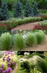 rock garden plants zone 7