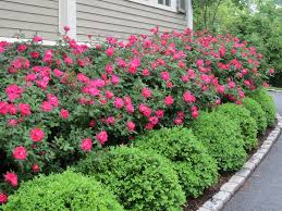 Small Picture 120 best Hedging and border ideas images on Pinterest