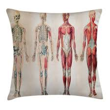 Human Anatomy Throw Pillow Cushion Cover Vintage Chart Of Body Front Back Skeleton And Muscle System Bone Mass Graphic Decorative Square Accent
