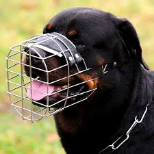 rottweiler dog mean. mean rottweiler attacked by a outside my house singletrack forum dog .
