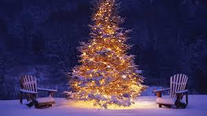 Christmas Tree Snow Winter HD Wallpaper