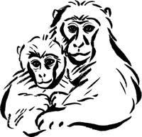 赤ちゃん猿の写真素材 人気順 フォトライブラリー Photolibrary