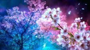 Cherry Blossoms Wallpaper Anime Cherry Blossom Night
