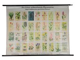 Vintage Poster Botanical Rollable Wall Chart Protected Plant