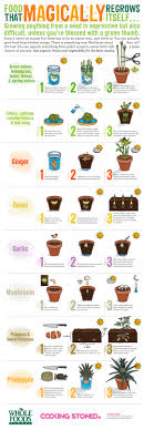 Kitchen Gardening Tips 25 Plants That You Can Regrow From Your Kitchen Scraps
