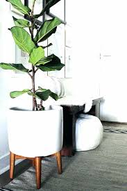 tall plant stand indoor small plant stand plant stands indoor plus plant stands plus small