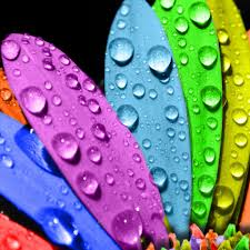 Colorful Flower iPad Wallpapers Free ...
