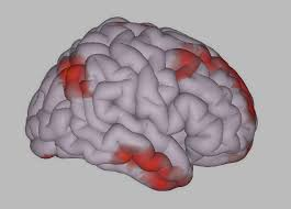 Image result for psychology language and brain