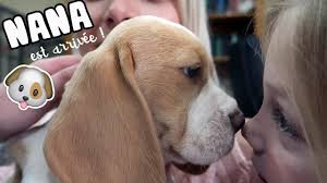 ♡• ON ADOPTE UN CHIEN •♡ - YouTube