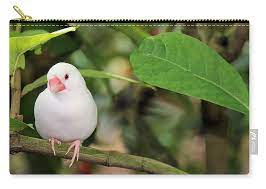 Little White Bird Carry-all Pouch for Sale by Rosalie Scanlon