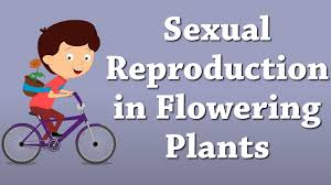 Plant Life Cycle Flow Chart Sexual Reproduction In Flowering Plants Aumsum