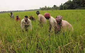 Image result for হাট বাজার নীতিমালা