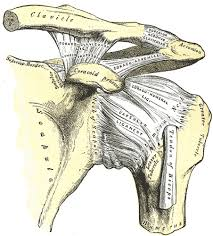 Ac joint osteoarthritis info