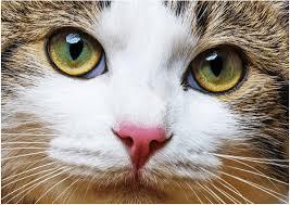 「猫の目」の画像検索結果