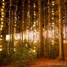 fairy light strands dropped from trees creates a magical woodland wedding setting via
