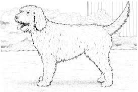 Small Picture Breeding Coloring Pages Puppy Coloring Coloring Coloring Pages