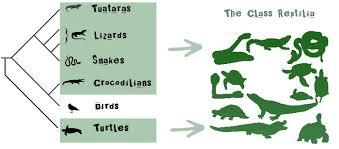 Reptilia Untamed Science
