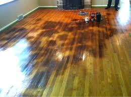 hardwood stains urine stain on wood floor clean cat