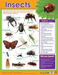 Insects Learning Chart School Poster