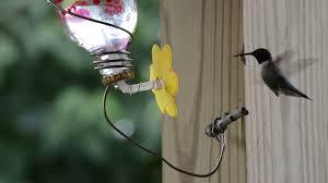hummingbird feeding at homemade feeder