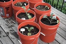 Small Picture Tips For Container Gardening Container Gardening Vegetables