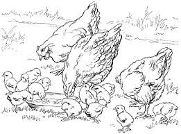 Chicken Coloring Pages Farm Family Chicken Animal Coloring Pages