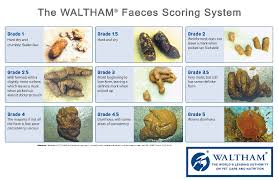Fecal Scoring Chart Survey Into The Effects Of Feeding Raw Food Diets In Rottweilers
