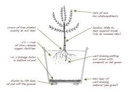 How To Plant A Tree Or ShrubPlanting A Fruit Tree