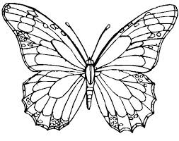 Free Printable Butterfly Coloring Pages Adults Realistic Butterfly