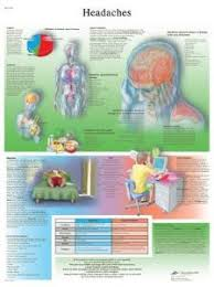 3b Scientific Headache Chart