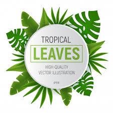 tropical deixa frame redondo com folha