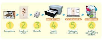 Microtek Object Scanner Objectscan 1600 The Herbarium
