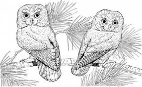 Small Picture Free Coloring Pages Of Owl Color Number 15245 Bestofcoloringcom